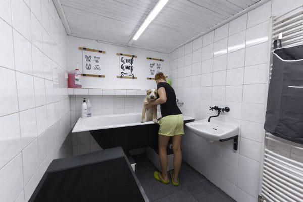 mytí a stříhání psu