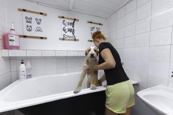 psi raj mytí a stříhání psu