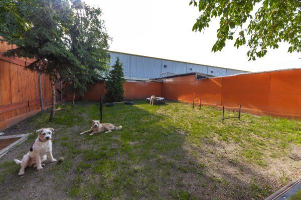 psi raj zahrada